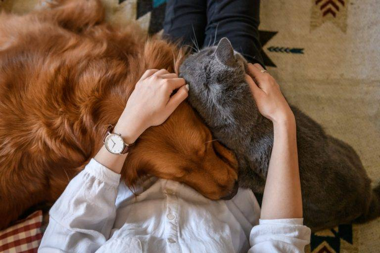 Is Pet Custody a Thing in Michigan Divorce Law?